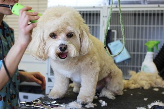 Questions To Consider While Conducting Market Research For Your New Pet Grooming Business